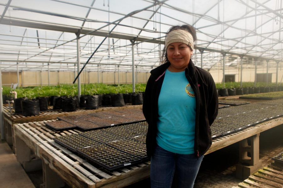 Angelica Garcia, Operations Manager, at the Evans Growers Farm.